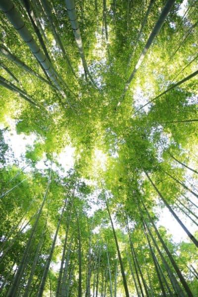 universal life fource, natural healing,